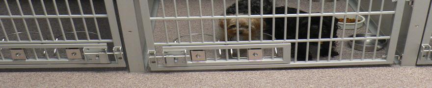 Animal-Petcare